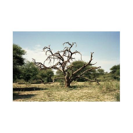 Sergio De Arrola - Dry (Botswana), 2016