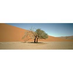 Sergio De Arrola - Fuck Dune 45 (Namibia), 2016